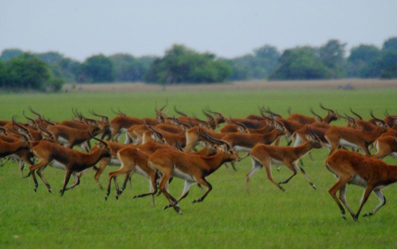 Bangweulu