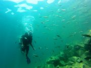 Snorkelling and Scuba Diving