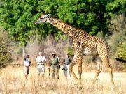 Walking Safaris banner