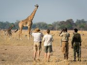 Zambia Classic Safari – South Luangwa, Lower Zambezi, Livingstone – 10 Nights banner